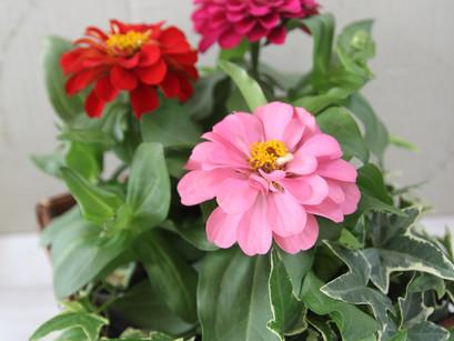 夏のお花たち