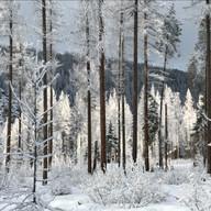 Winter Light by Noni Belland