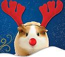 www.southendchristmasparties.com
