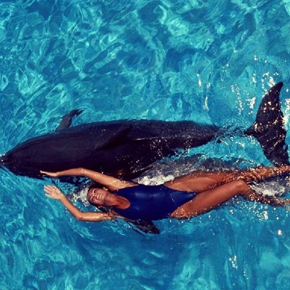 Dolphin Cove
