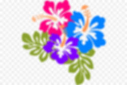 kisspng-hawaii-yellow-hibiscus-clip-art-