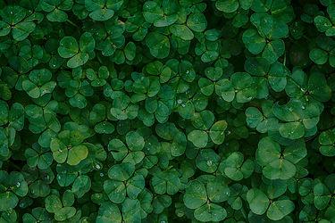 clover-1225988.jpg