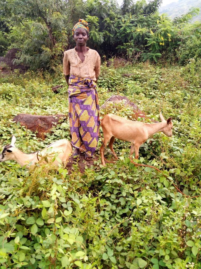 Tatu Beatrice goats