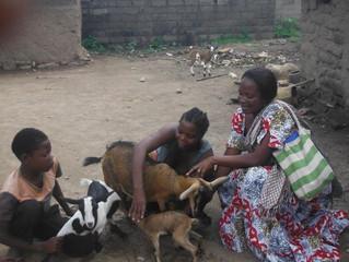 Sustainable Livelihoods Update