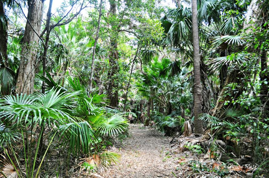 rainforest-walk-mungo-brush.jpg