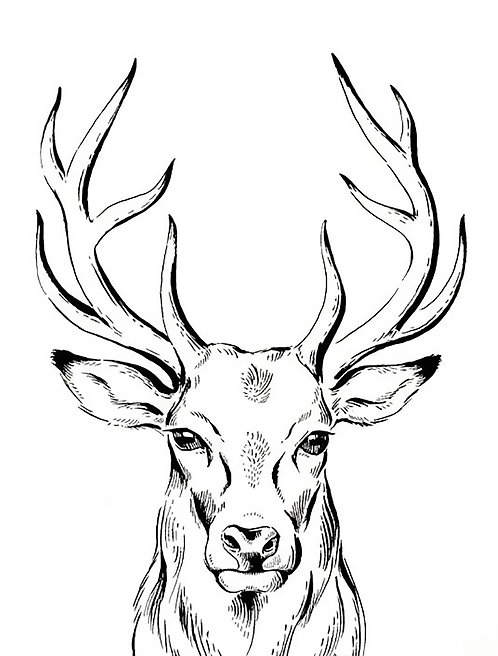 Stag 4x6 inches Art Print