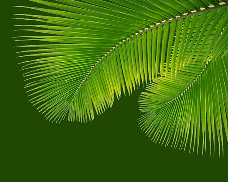 Tropical Leaves 4x6 inches Art Print
