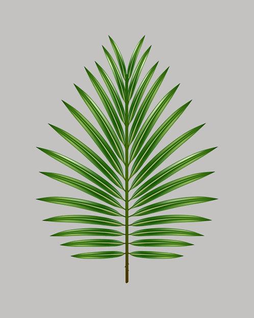 Tropical Leaf II 4x6 inches Art Print