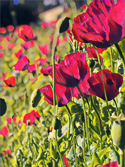 Poppies on Parade 24x30cm Art Print