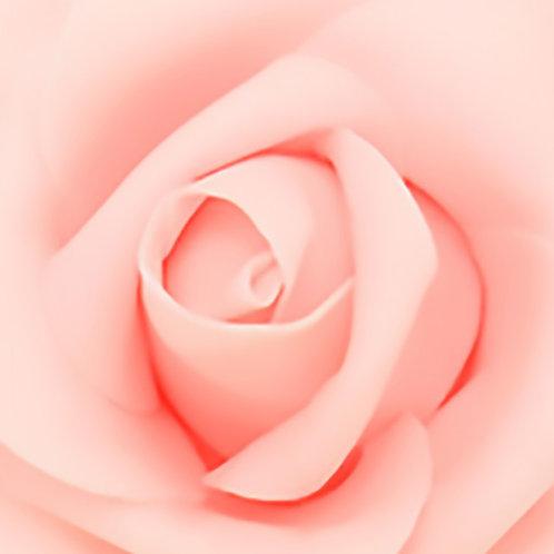 Blush Rose 30x30cm Art Print