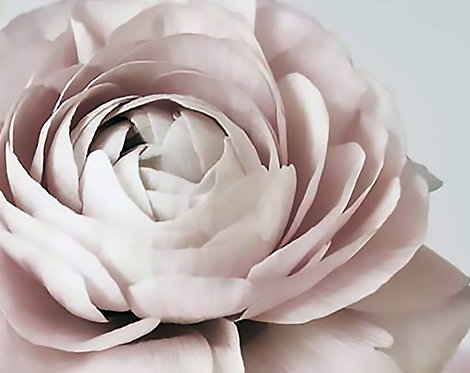 Blush Floral III 40x50cm  Art Print