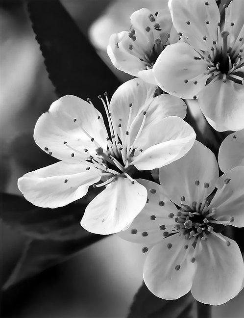 White Floral 24x30cm Art Print