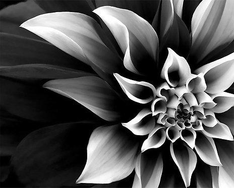 Black & White Floral 4x6 inches Art Print