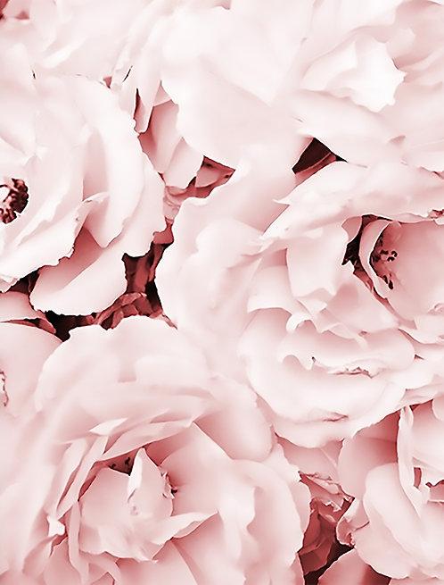 Blush Floral 40x50cm Art Print