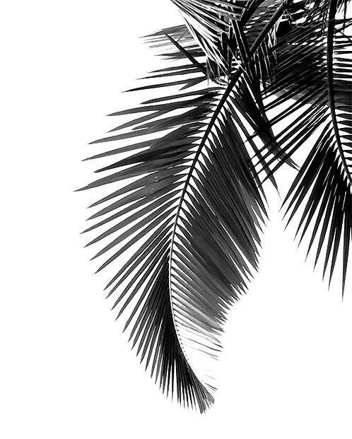 Black & White Palm Leaf 40x50cm Art Print