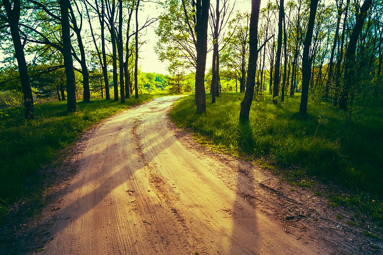 Beautiful Green Forest In Summer. Countryside Road, Path, Way, L.jpg