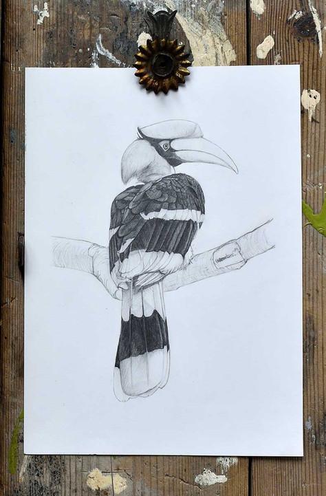 hornbill-1200-2.jpg