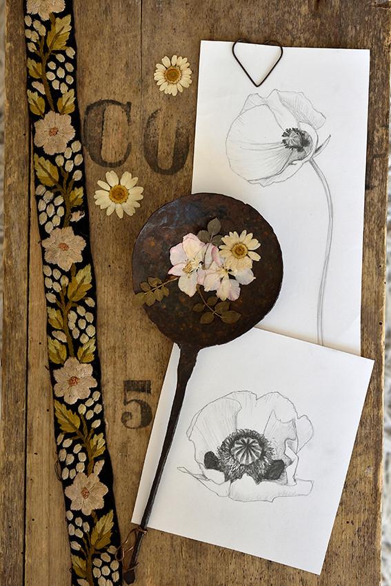 Emma Wild Poppy drawings 72.jpg