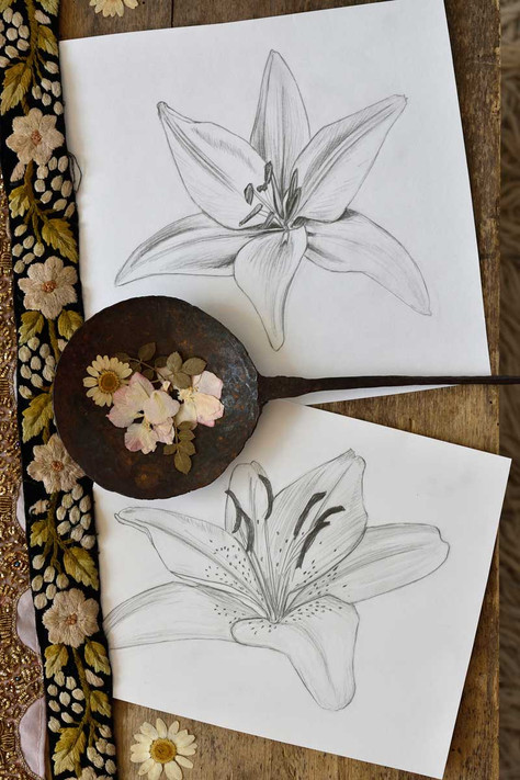 Emma-Wild-Lily-drawings-1200.jpg