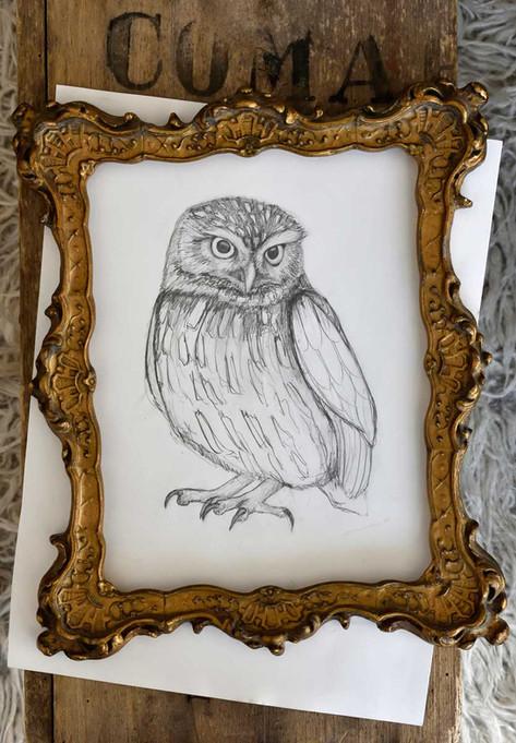 Emma-Wild-Owl-drawing-2-1200.jpg