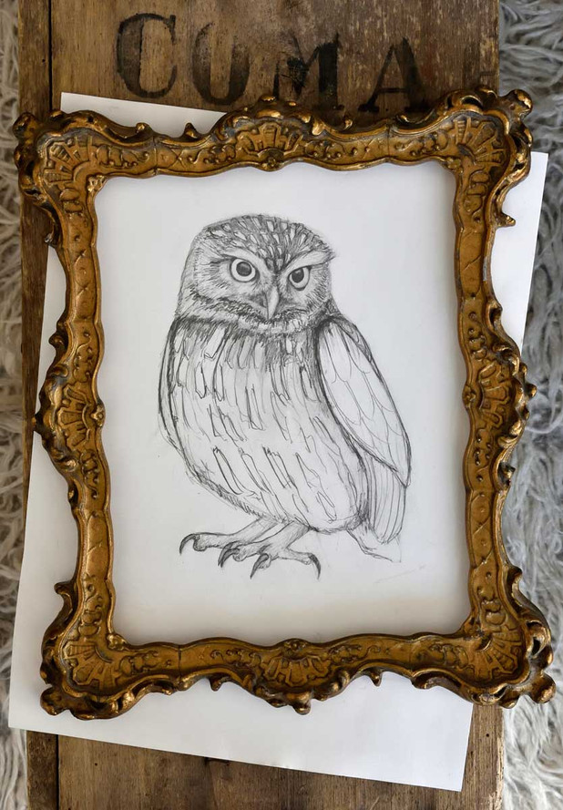 Emma-Wild-Owl-drawing-2-1200.jpg