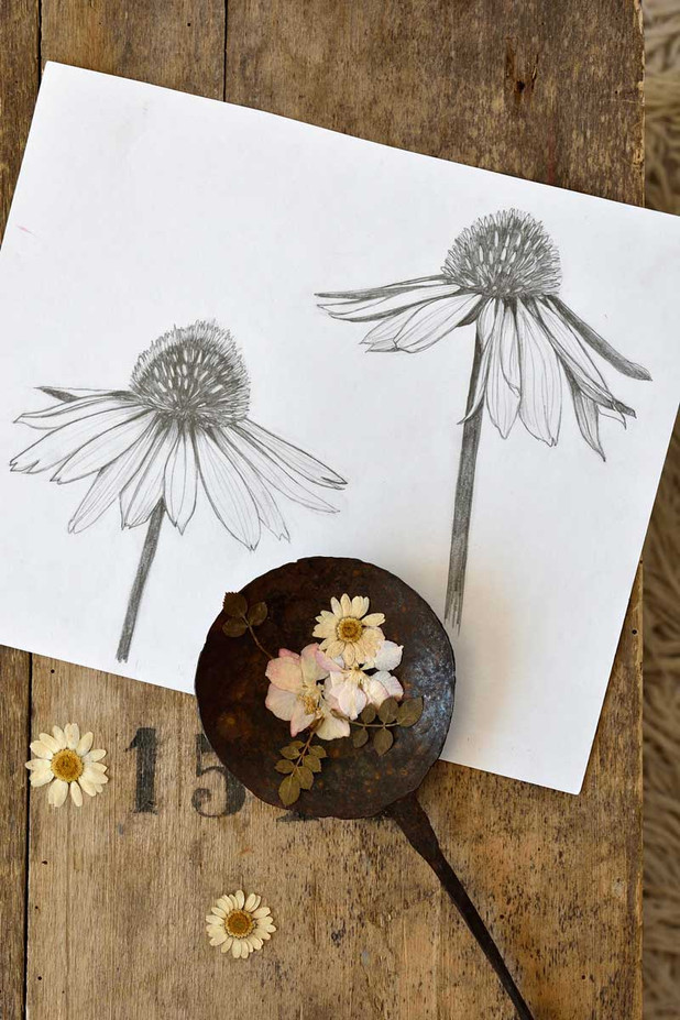 Emma-Wild-2-Coneflowers-drawing-1200.jpg