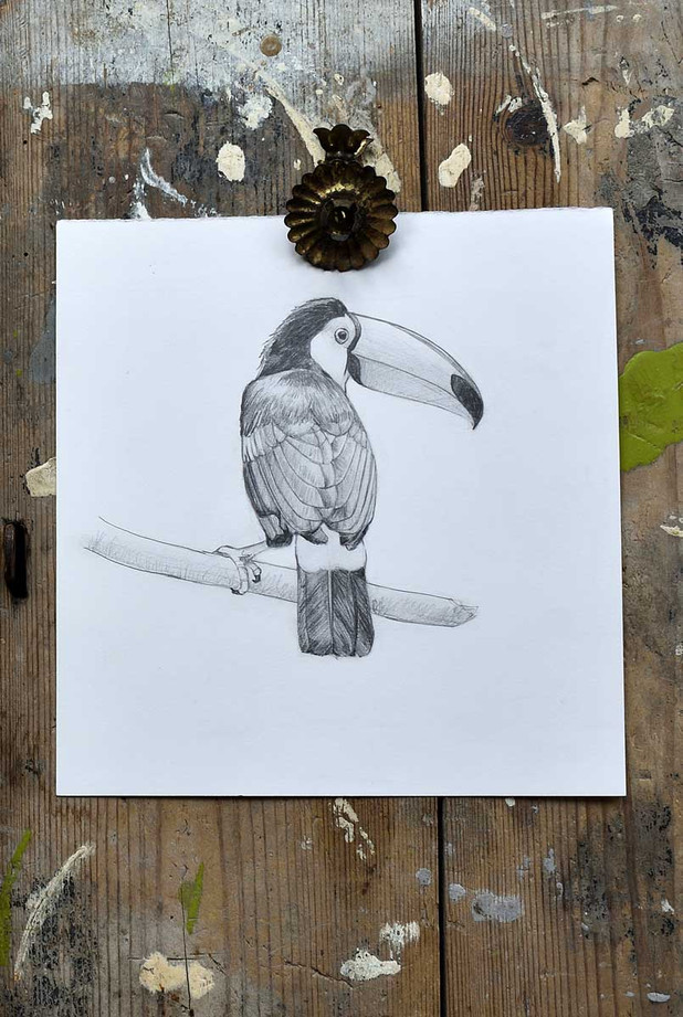 toucan-drawing-1200.jpg
