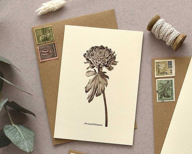 chrysanthemum-1200.jpg