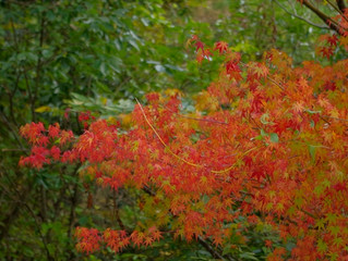 五家荘全体の紅葉状況