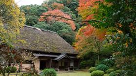 五家荘の紅葉 3