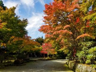 五家荘の紅葉状況 2