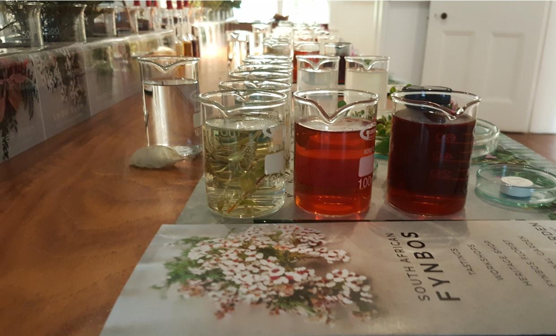 Fynbos Tasting Room