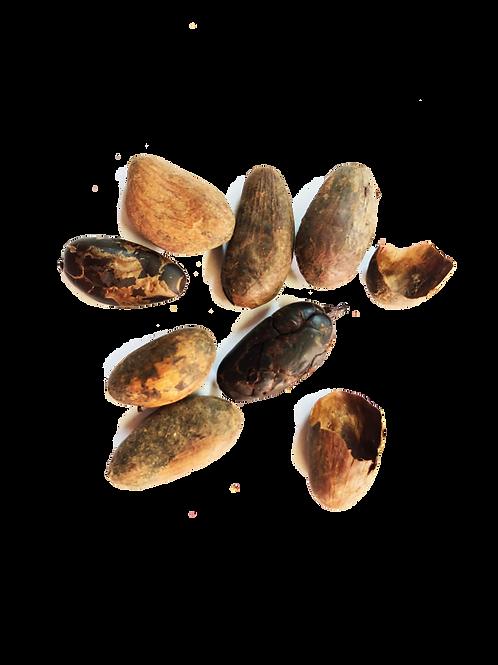 Cacao Finca Sampaka