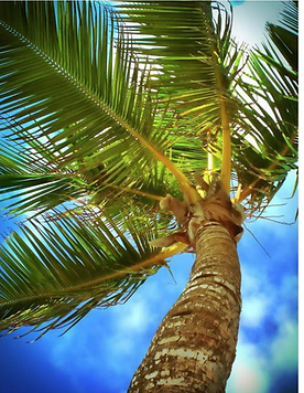 This is a coconut palm leaf the thatch is modeled after.