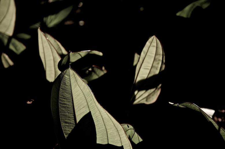 Parapluies de Nuit Je ne dors pas ... Papillons de Lune et toi ?