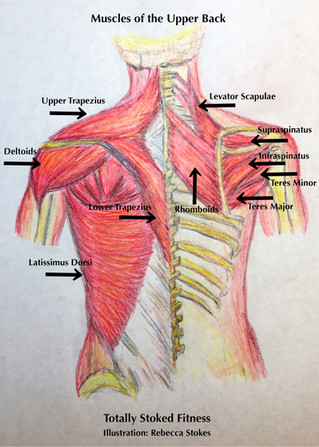 Pole and Aerial Upper Back Imbalances