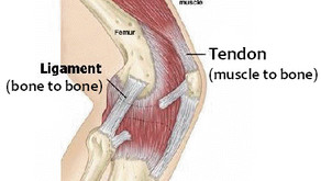 Muscle and Joint Injury Prevention for Pole