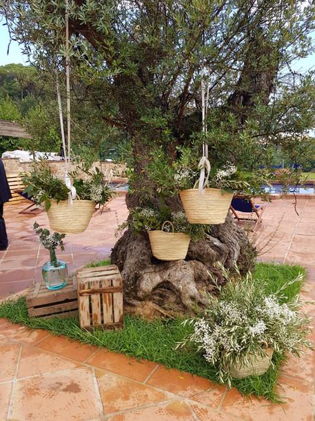 Bodegón de cestos y cajas de madera con olivo, eucalipto y paniculata