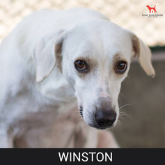 Details: Male, 8 years old Breed: Mixed, medium Health: Vaccinated, spayed Socialization: Dogs, cats, hoomans Training: Leash Behavior: Nervous