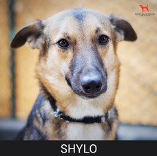 Details: Male, 8 years old Breed: Mixed, medium Health: Vaccinated, spayed Socialization: Dogs, hoomans Training: Leash Behavior: Active