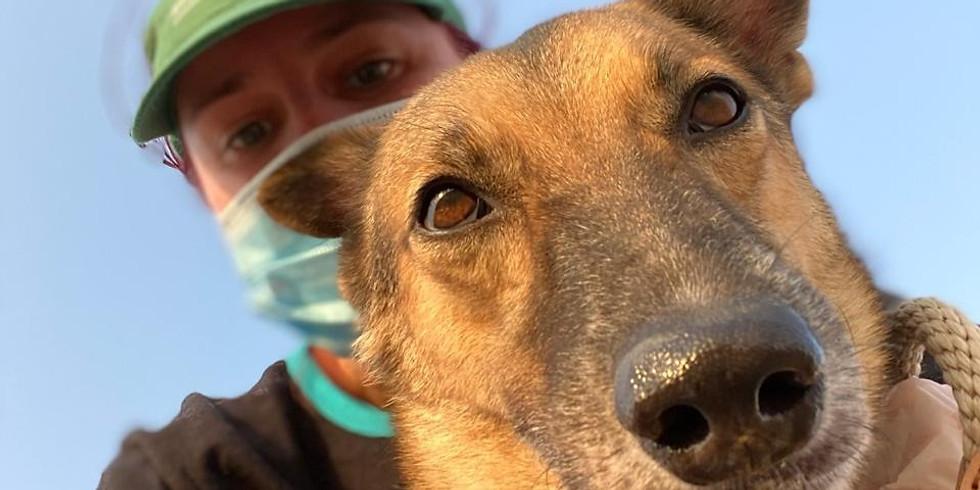Sunrise Social Distance Volunteer Doggy Walk - Saturday