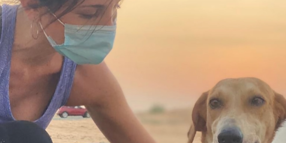 Sunrise Social Distance Volunteer Doggy Walk - Friday