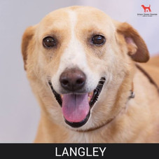 Details: Male, 10 years old Breed: Mixed, medium Health: Vaccinated, spayed Socialization: Dogs, cats, women Training: Leash Behavior: Cautious
