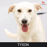 Details: Male, 5 years old Breed: Mixed, medium Health: Vaccinated, spayed Socialization: Dogs, hoomans Training: Leash Behavior: Active