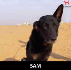 SAM GSD.jpg
