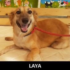 LAYA.jpg
