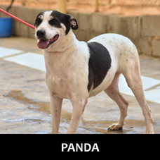 Age: Female, 7 years old Breed: Mixed, medium Health: Vaccinated, spay Socialization: Dogs, cats, hoomans Training: Leash Behavior: Jealous