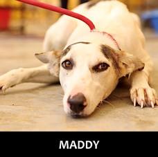 MADDY (2).jpg