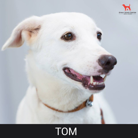 Details: Male, 4 years old Breed: Mixed, midi Health: Vaccinated, spayed Socialization: Dogs, cats hoomans Training: Leash Behavior: Calm, peaceful