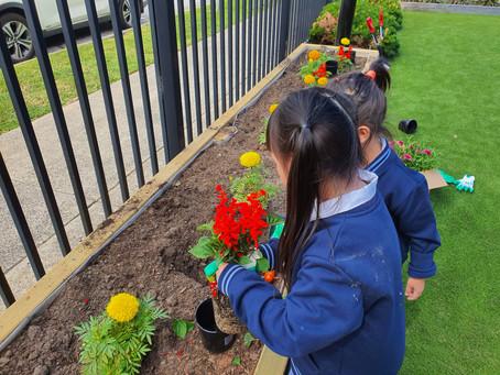 Prep Flower garden